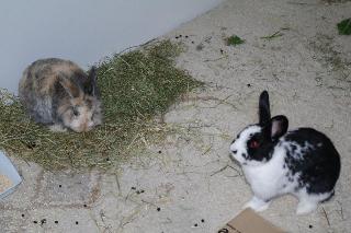 Kaninchen - Meerschweinchen - Ines Dietze